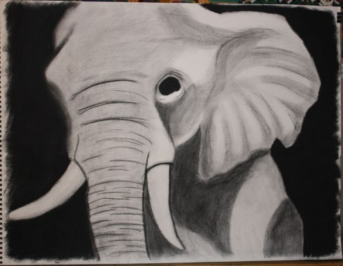 Senior Elephant